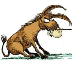stubborn-mule
